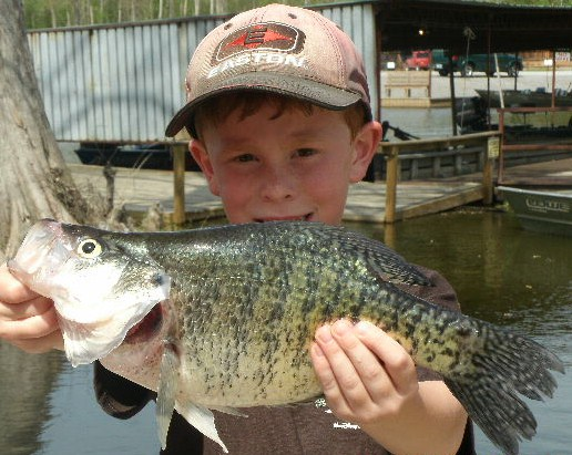 Summertime crappie fishing special on reelfoot lake for Reelfoot fishing report