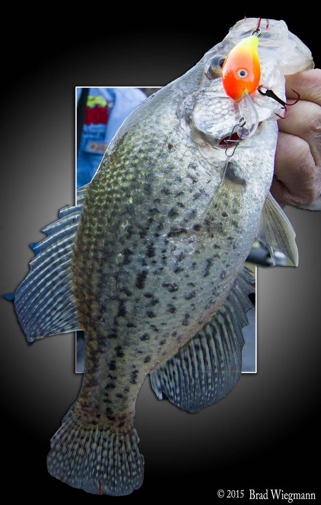 Anglers need new products and lures by brad for Crappie fishing tackle