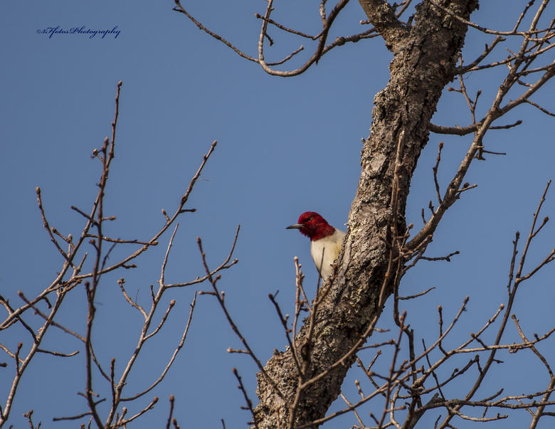 Click image for larger version.  Name:_DSC5794.jpg Views:298 Size:86.4 KB ID:323381