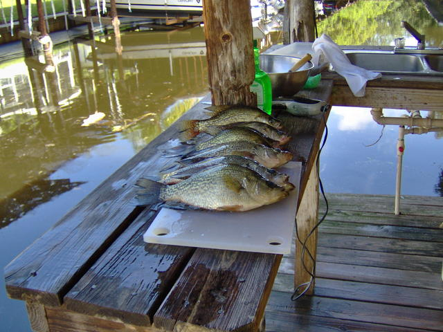 Allen Afield: Crappies are invasive, but they're great fun ...  Crappie Lake Food Chain