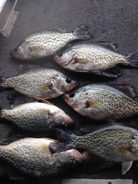 Report lake talquin for Crappie fishing florida