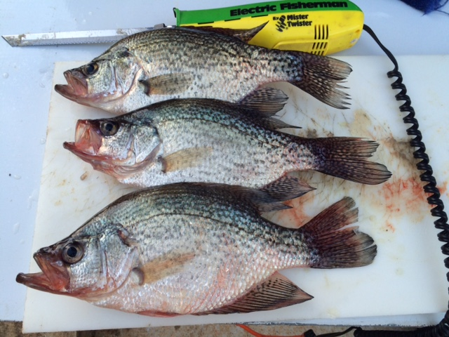Thursday on oconee for Crappie fishing in ga