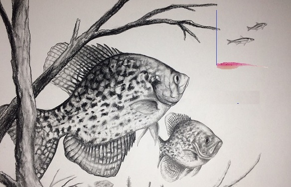 Name:  Crappie Painting.jpg Views: 357 Size:  91.2 KB