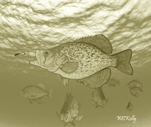 Name:  Covey of Crappie Sepia.png Views: 260 Size:  469.9 KB
