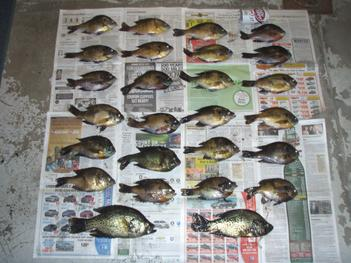 Crappie in strip pits