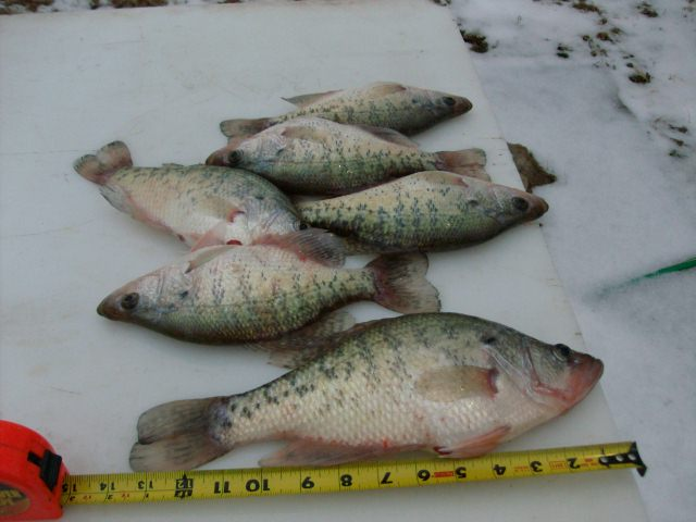 2014 lake record crappie for Kansas fish records