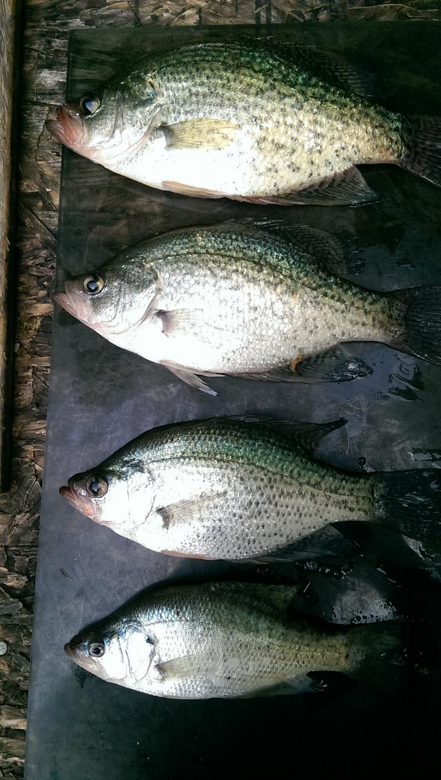 Self imposed 10 size limit for Kentucky fish and wildlife phone number