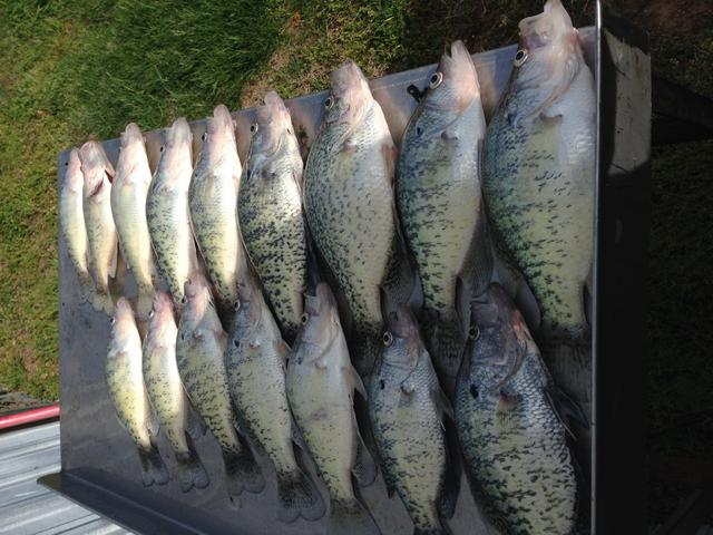 Ky lake 4 14 fishing report for Kentucky lake fishing guides