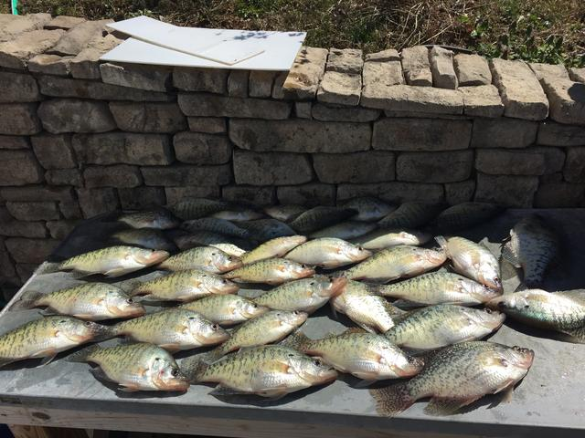 Green river lake report for Kentucky lake crappie fishing report