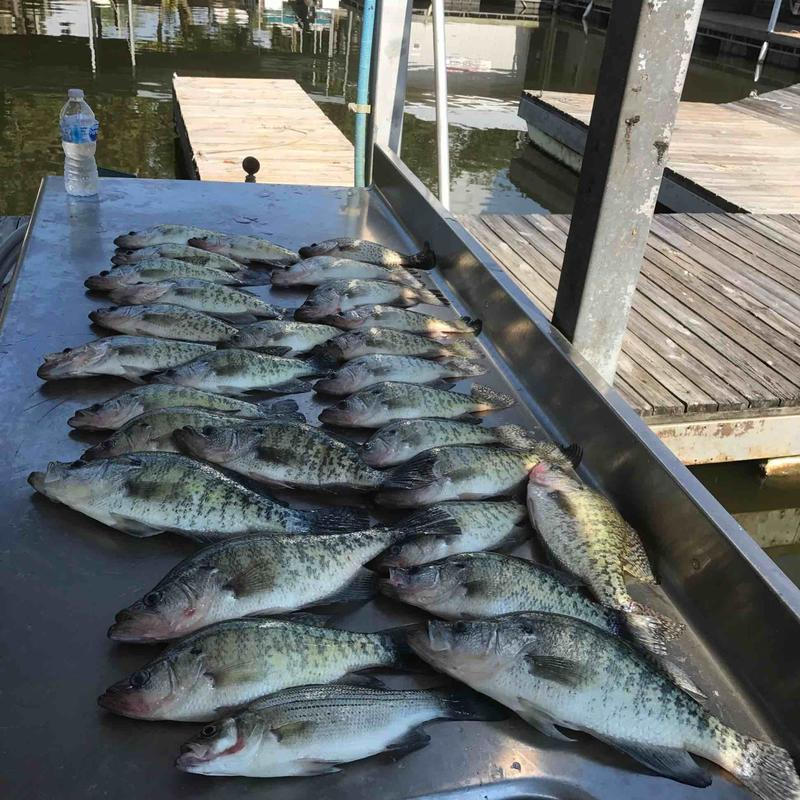What it 39 s all about ky lake 9 25 for Crappie fishing in ky