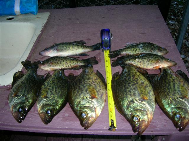 Caddo lake oil city shady rest for Caddo lake fishing report