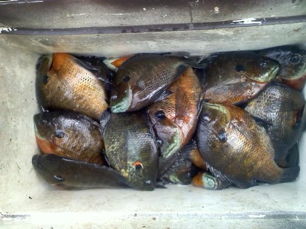 Bream fishing was good today for Is the fishing good today