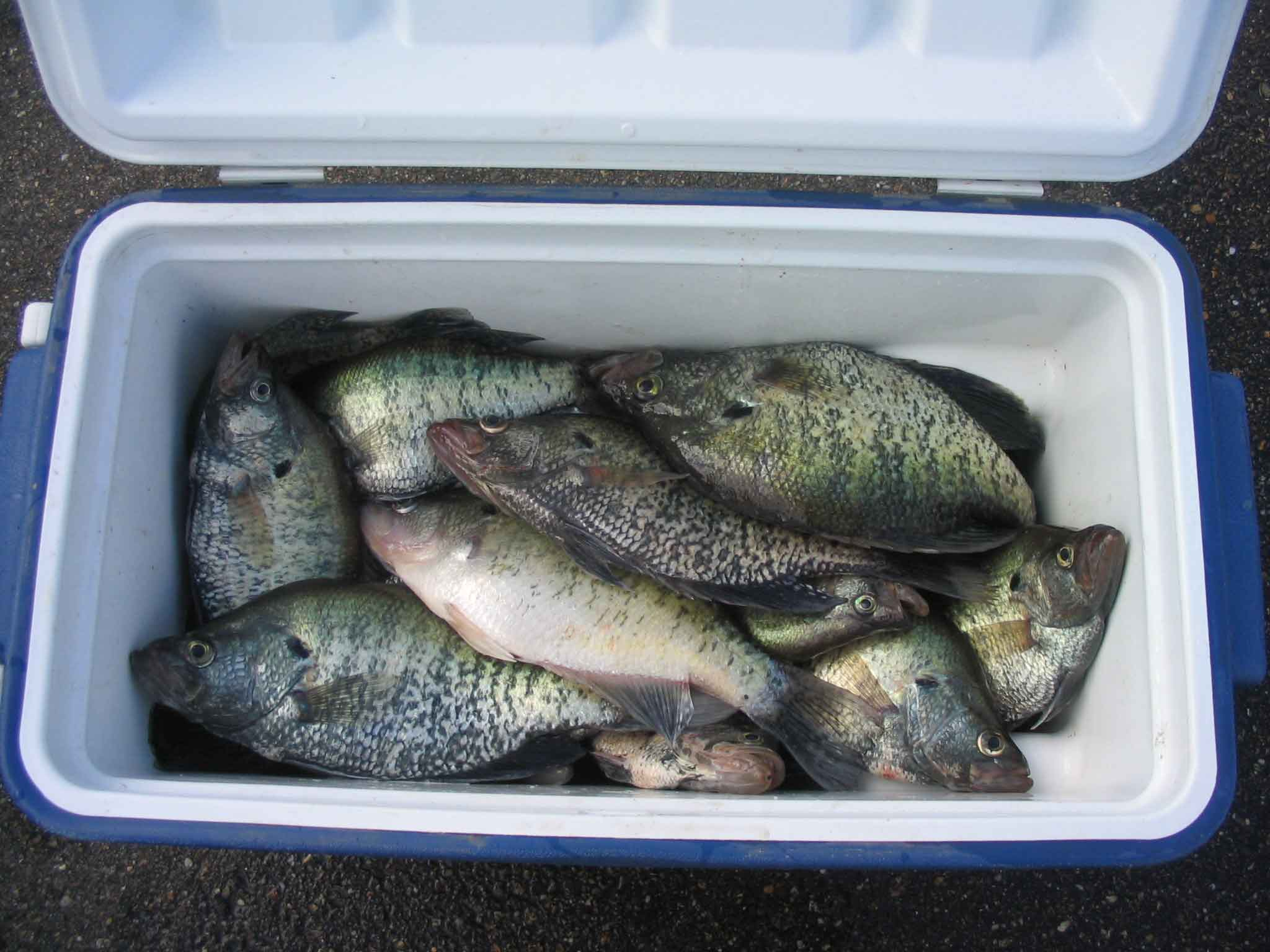 Cooler full of ms crappie for Best fishing coolers