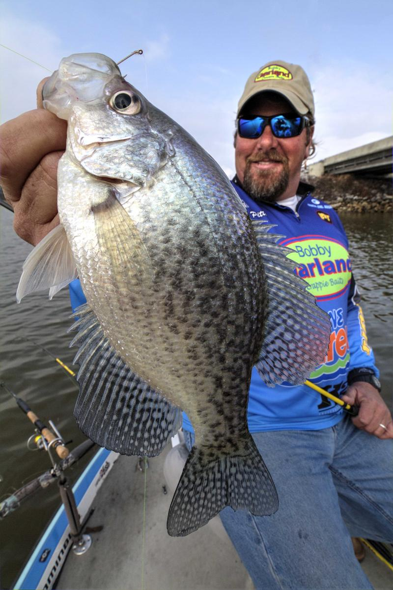 Back to school for crappie anglers brad wiegmann for Crappie fish facts
