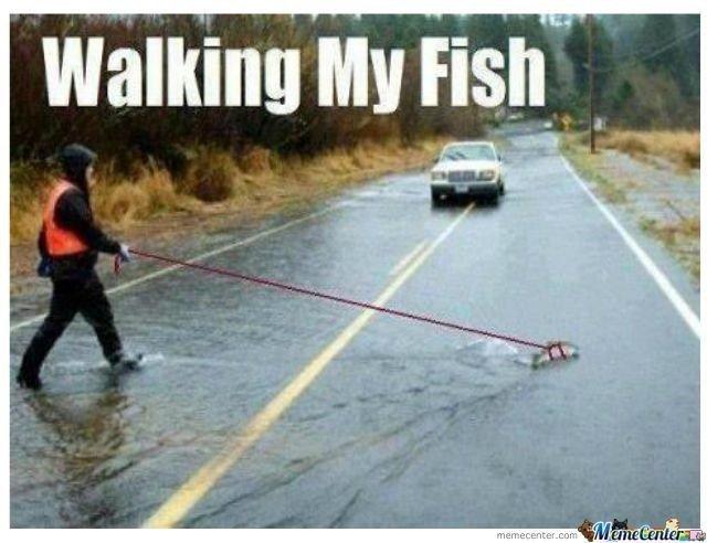 Name:  fish-meme-of-someone-walking-their-fish-in-a-puddle.jpeg