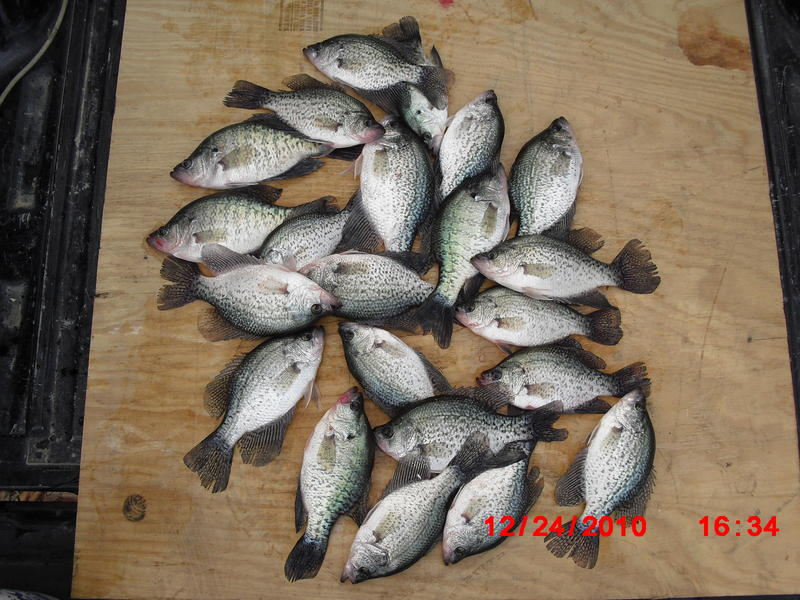 Christmas eve crappie lake livingston tx for Crappie fishing in texas
