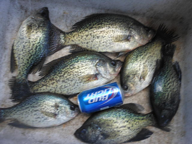 Tablerock lake aunts creek area for Crappie fishing in missouri