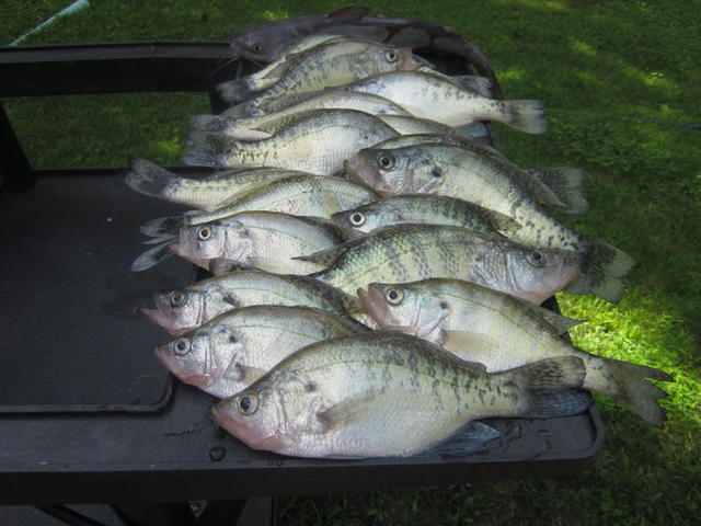 Loz sunday 12 july 15 for Crappie fishing in missouri