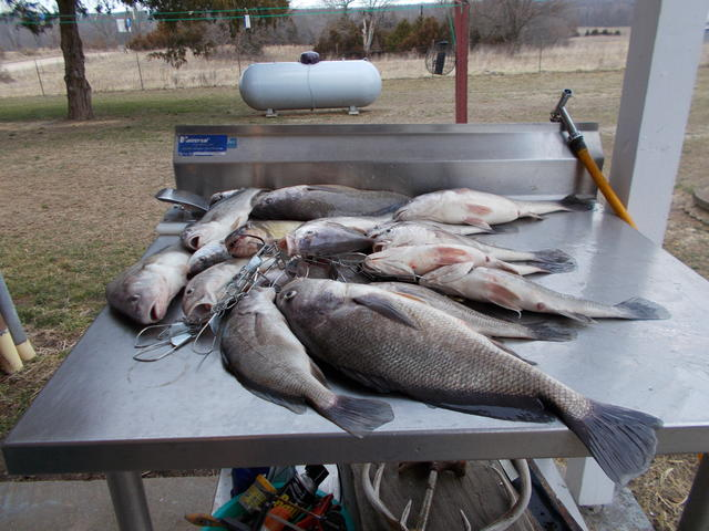 Not crappie but fish for Crappie fishing in missouri