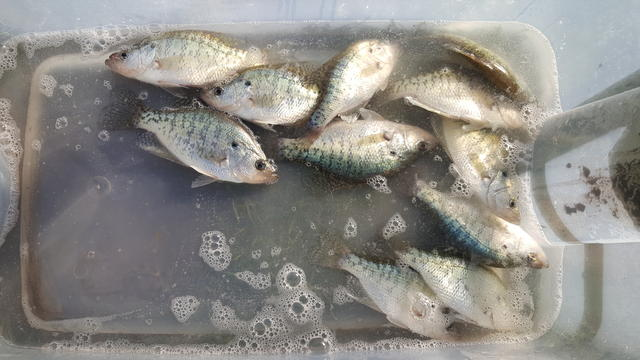 Crappie bite at the ville way off today for Are fish biting today