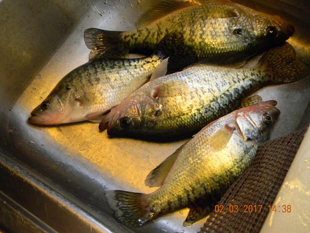 Cold and misserable on stockton for Crappie fishing in missouri