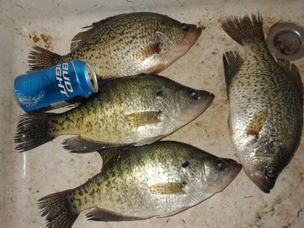 With a little help from my friends for Table rock lake crappie fishing
