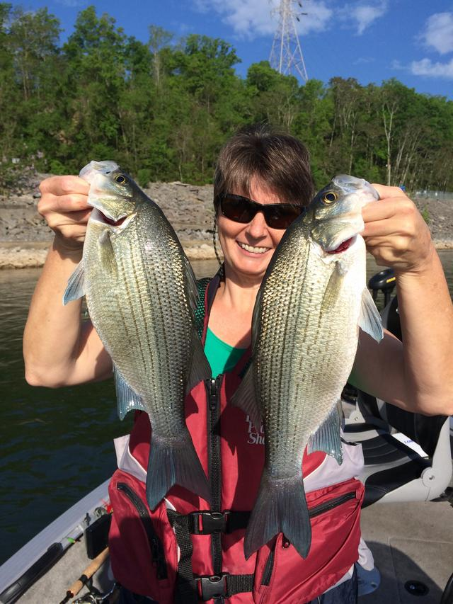 Watts bar tailwater report white bass and walleye 4 20 16 for Crappie fishing in tennessee