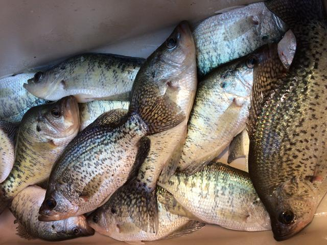 Loudon 1 28 17 for Crappie fishing in tennessee
