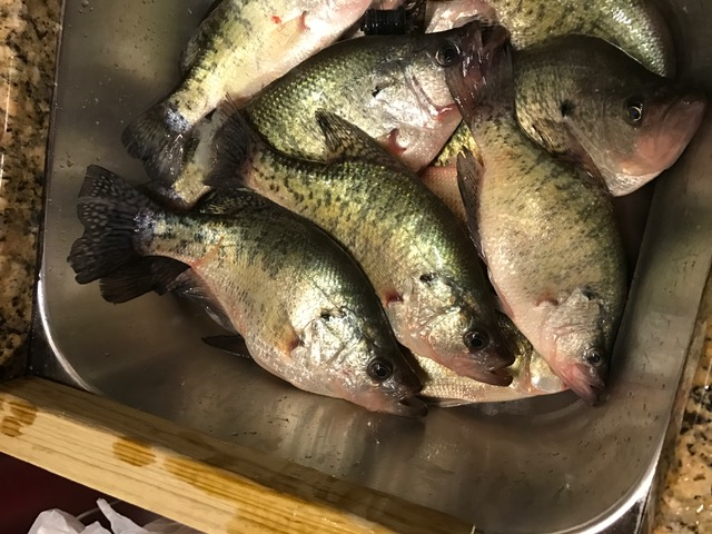 South end of kentucky lake fishing report for Kentucky lake crappie fishing report