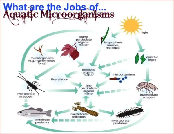 Aquatic Systems An Overview  Crappie Lake Food Chain