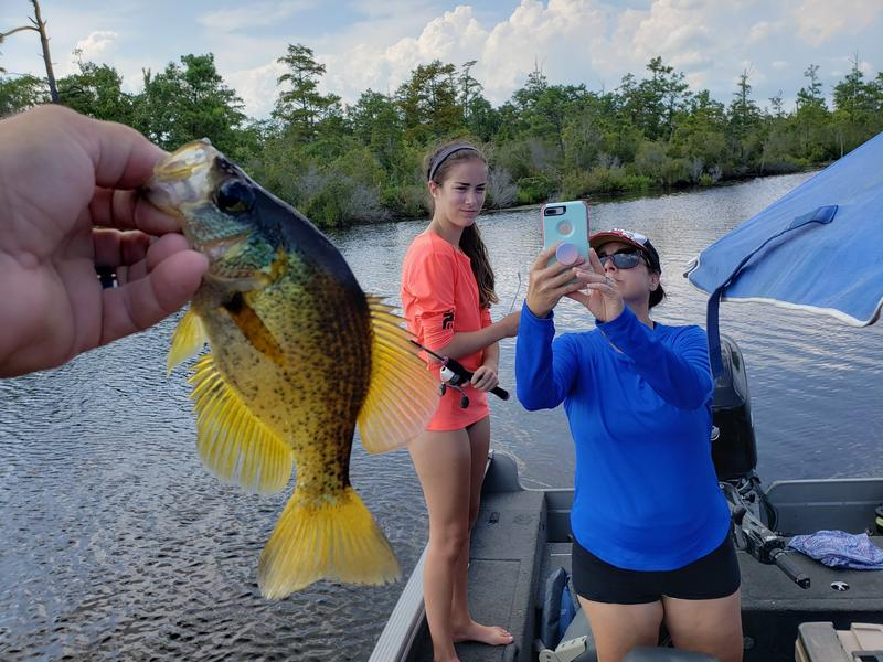 Name:  yellow crappie.jpg